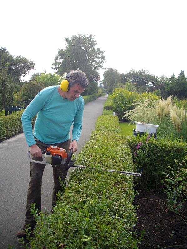 Groenblad Hoveniers in Leiden en omgeving zuid holland